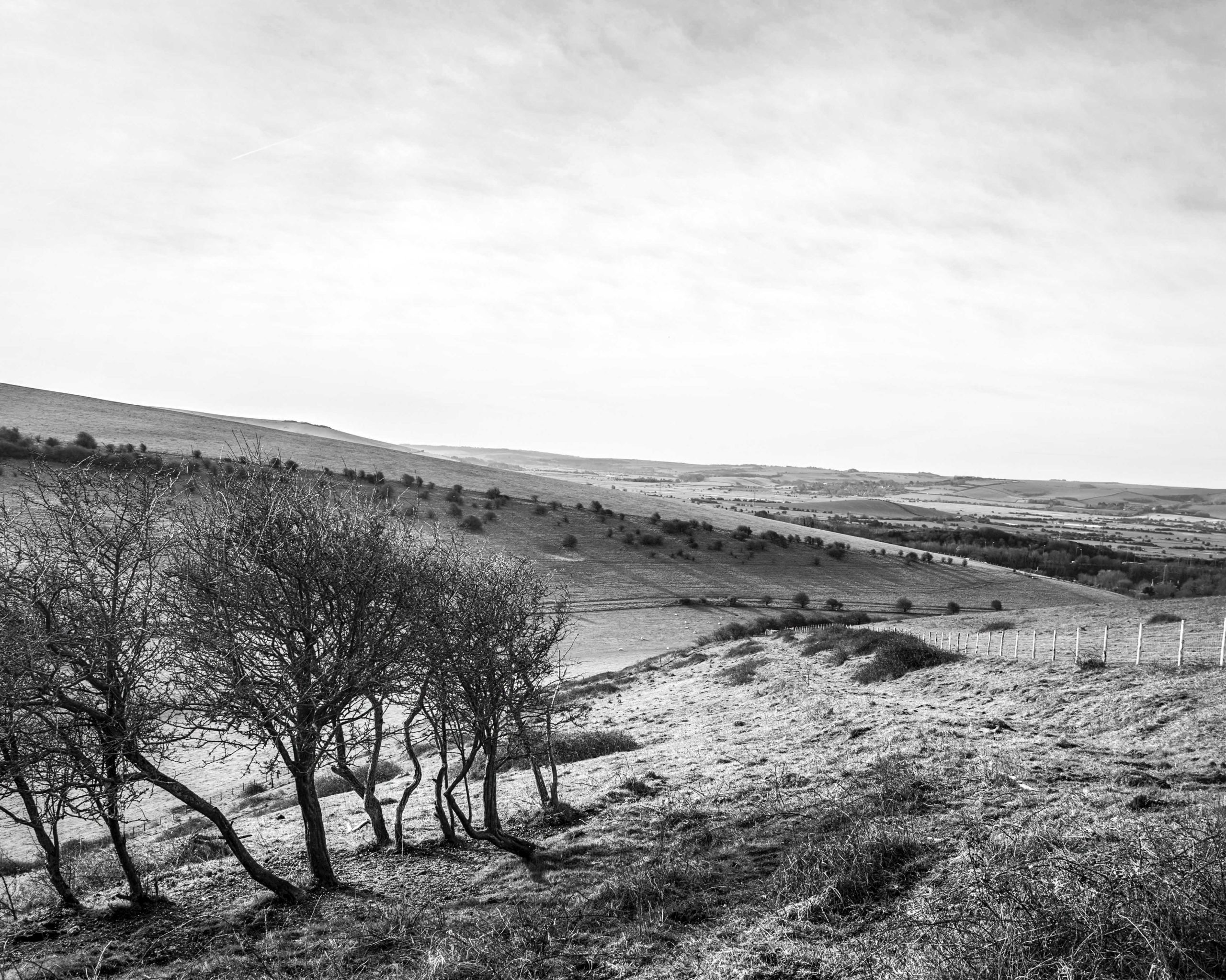 South Downs Black and White